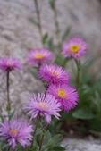 A few wonderful flowers grow on a rock — Stock Photo