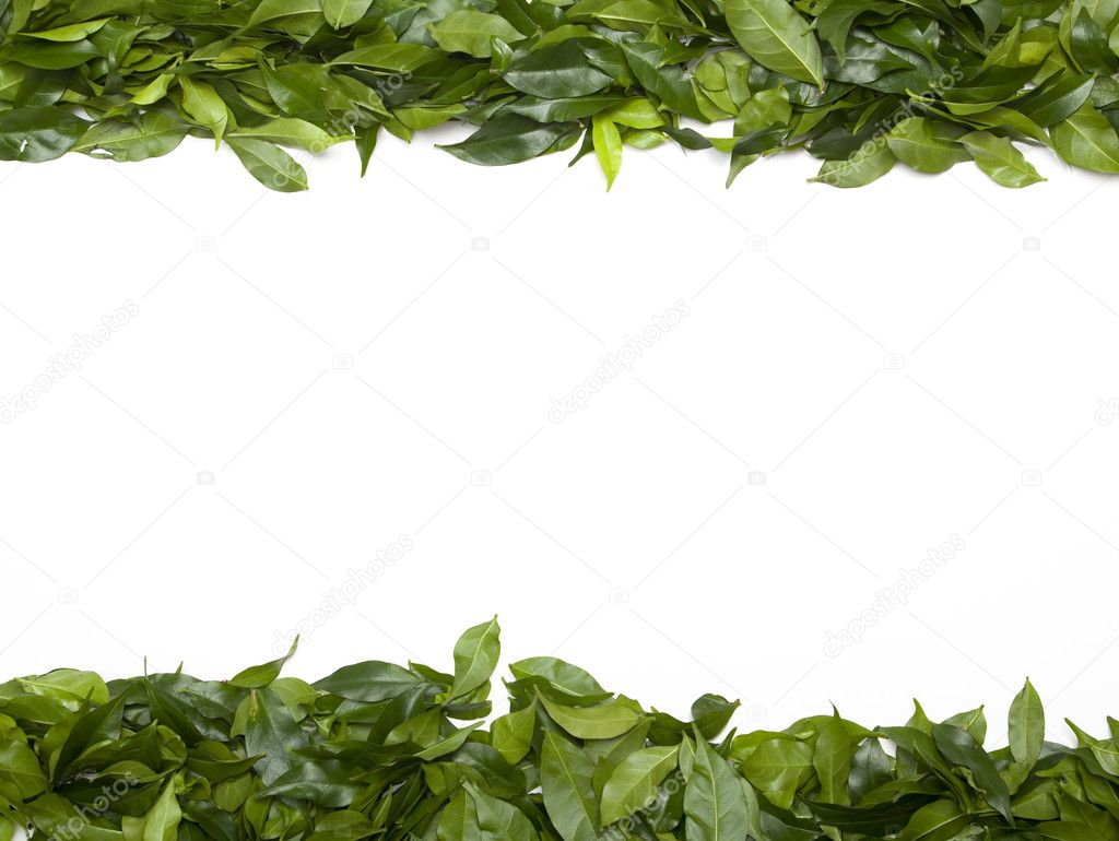 Colorful green leaves making a top and bottom border with copy space in the center — Stock Photo #2914145