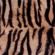 Animal Fur Background — Stock Photo #2799962