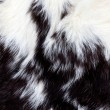 Animal Fur Background — Stock Photo #3139762
