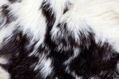 Animal Fur Background — Stock Photo