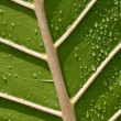 Foto de Stock  : Underneath Of Leaf