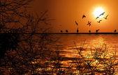 Nil ve kuşlar — Stok fotoğraf