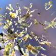 Flying money — Stock Photo #2865135