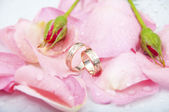 Rose and wedding rings with drops of watter — Stock Photo