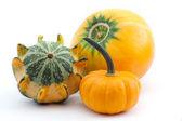 Pumpkins — Photo