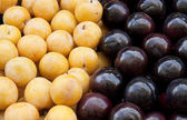 Yellow and black plum — Stock Photo