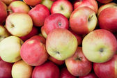 Red ripe apples on the counter farm market — Stock Photo