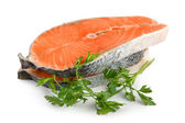 Salmon isolated — Stock Photo