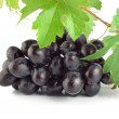 Fresh blue grape isolated — Stock Photo