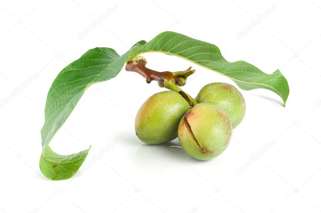 A branch of a walnut isolated on a white background — Stock Photo #3808793