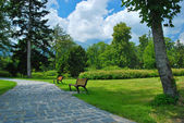 Alley with benches in park — Stock Photo