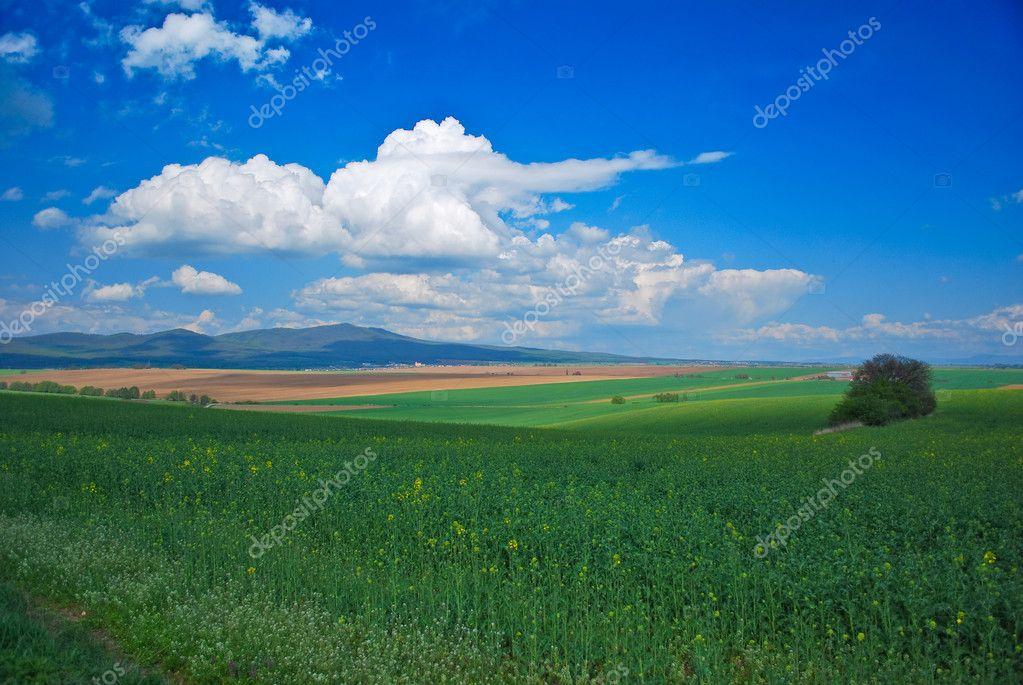 Green oil-seed field — Stock Photo #2855006