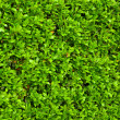 Green bushes leaves - Stock Photo