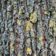 Bark of pain — Stock Photo #2840138
