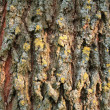 Bark of pain — Stock Photo #2840432