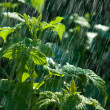 Stock Photo: Branch shrubs in rain
