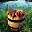 Crabs on a barrel of beer — Stock Photo