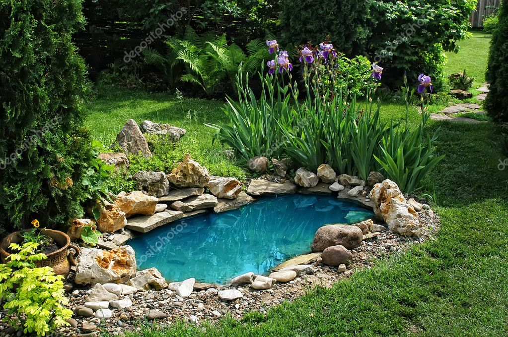 Small pond on a summer day in the garden — Stock Photo #5087346
