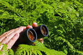 Binoculars in hand from the bushes — Stock Photo