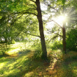 Light rays through the trees — Stock Photo #3866411