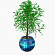 Stock Photo: Potted plant