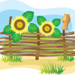 Stock Vector: Wicker fence and sunflowers.
