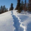 Snowshoe tracks — Stock Photo