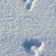 Snowshoe hare tracks in the snow — Stock Photo #2835416