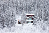 Cozy isolated home in winter forest — Stock Photo