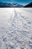 Windblown snowmobile tracks — Stock Photo