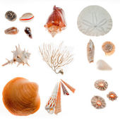 Beach findings — Stock Photo