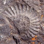 大化石的扪 — 图库照片