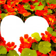 Flower greetings from heart — Stock Photo