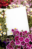 Flowers and Copyspace — Stock Photo