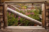 Vintage Yukon Cabin — Stock Photo