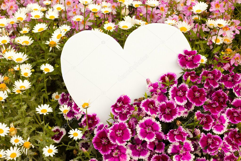Garden flowers with white, heart shaped copyspace for your message of love. — Stock Photo #3891918