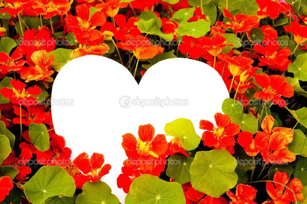 Nasturtium flowers with white heart shaped copyspace for your message of love. — Stock Photo #3892064
