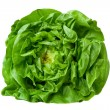 Butter Lettuce — Stock Photo