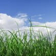 Green Grass — Stock Photo #3377901