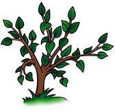 Petit arbre à feuilles caduques — Vecteur