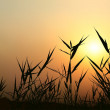 Sunrise - Meadow and Grass Silhouettes — 图库矢量图片