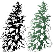 Snowy Conifer — Stock Vector