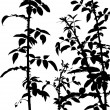 Thorny Shrub — Vettoriale Stock #3200541