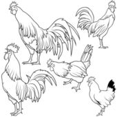 Rooster Collection — Stock Vector