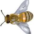 Stock Vector: Honeybee