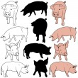 Pig Collection — Stock Vector #3247088