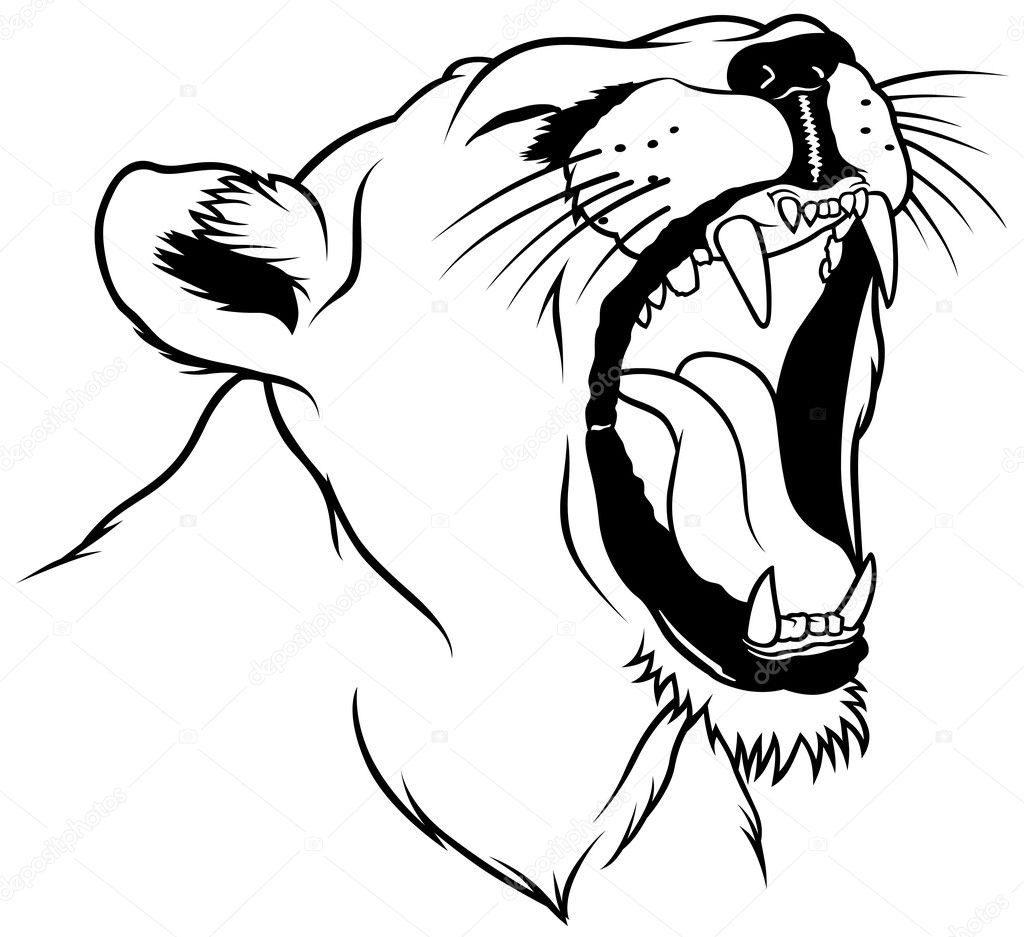 Lioness Head Drawing Lioness Head Hand Drawn
