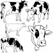 Cow Collection - Imagen vectorial