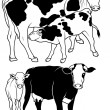 Cow Collection — Stock Vector